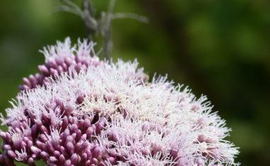 Stärken Sie Ihr Immunsystem mit Pflanzenheilkunde